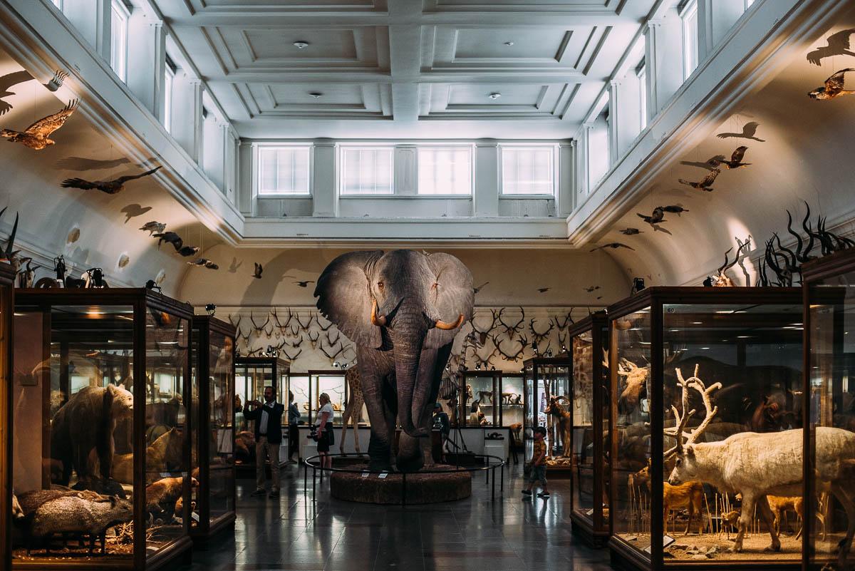 utflykt till naturhistoriska